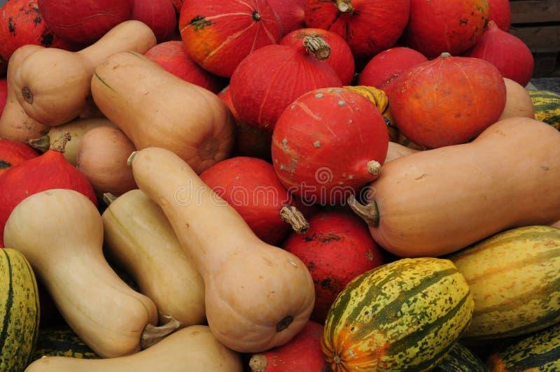 Pumpkins No. 2 stock photo