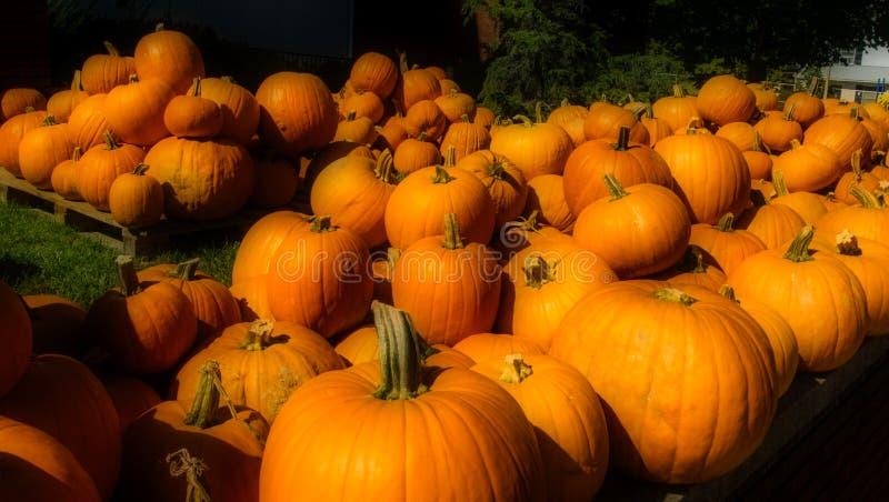 Pumpkins, North Carolina arkivfoton
