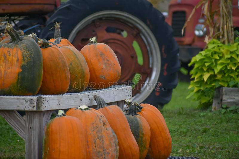 Pumpkins and old Farm Tractors. A load of many pumpkins sitting on a shelf with old farm tractors in the background stock photos