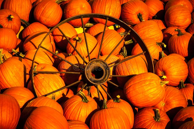 Pumpkins with an old wagon wheel. Orange pumpkins with an old rusty wagon wheel stock image