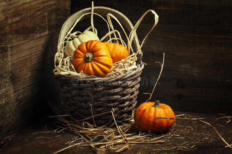Download Pumpkins stock image. Image of autumn, fall, nature, miniature - 45291025