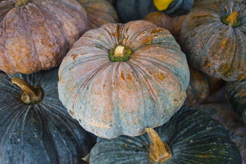 Download Pumpkins stock image. Image of fiber, cooking, market - 39507597