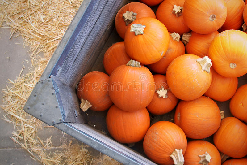 Download Pumpkins stock photo. Image of stems, sale, fall, ripe - 34640788