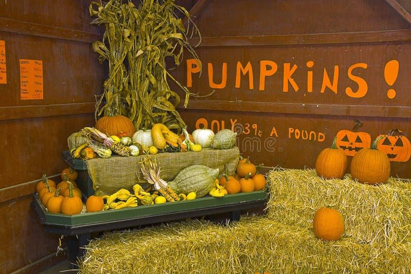 Download Pumpkins for Sale stock image. Image of building, pumpkins - 16462239
