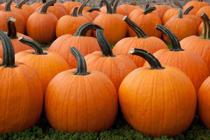 Download Pumpkins For Sale stock image. Image of lantern, gourd - 26533729