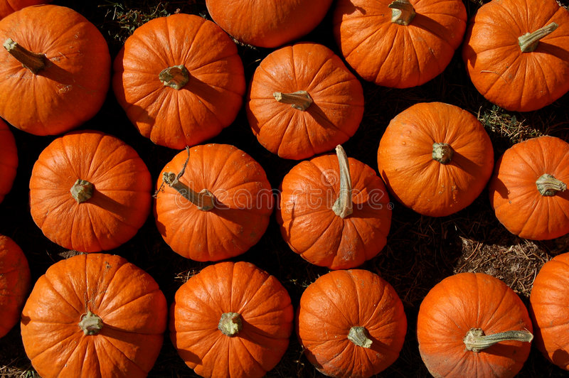 Pumpkins for Sale. View from above of pumpkins for sale at a harvest market royalty free stock photo