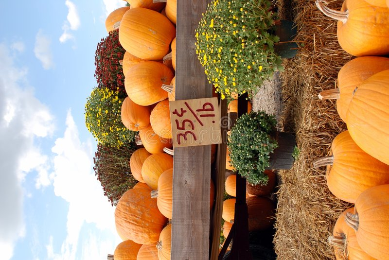 Download Pumpkins For Sale Royalty Free Stock Photo - Image: 3336895