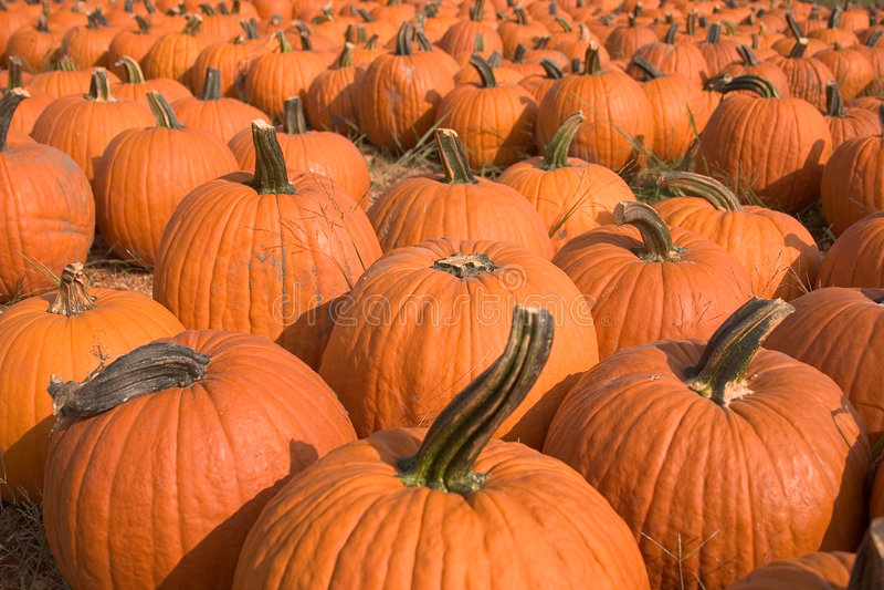 Download Pumpkins for sale 5 stock image. Image of pumpkin, decorations - 277529