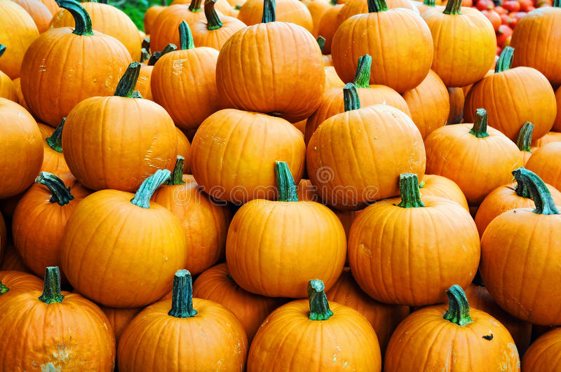 Pumpkins. For sale in Austria royalty free stock photo