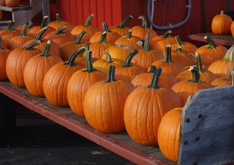 Pumpkins for sale at farm market. Bright orange Halloween pumpkins lined up on a farm wagon in Maine in October, fun, happy, excitement, carving Jackolantern royalty free stock photography