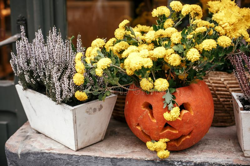 Pumpkins with scary faces and flowers in city street, holiday decoration of garden and buildings. Halloween street decor. Space royalty free stock photography