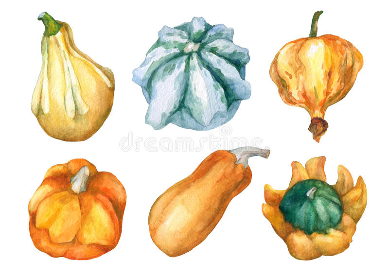 Pumpkins. Set with decorative pumpkins watercolor painting. Set with decorative pumpkins watercolor painting on white background stock illustration