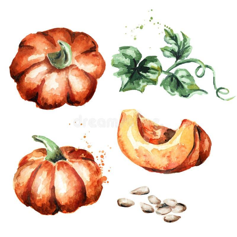 Pumpkins set. Watercolor illustration vector illustration