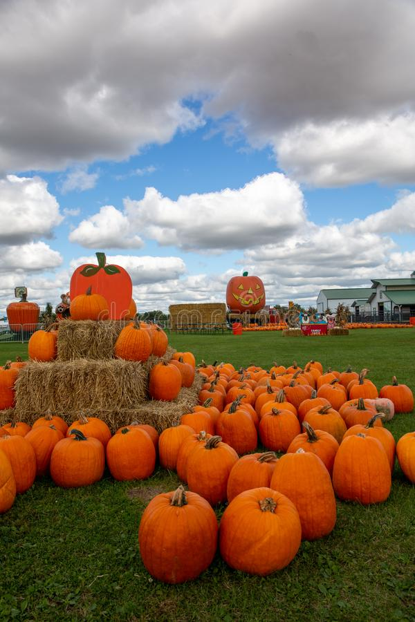 Pumpkins on a Picturesque cloudy fall day stock image