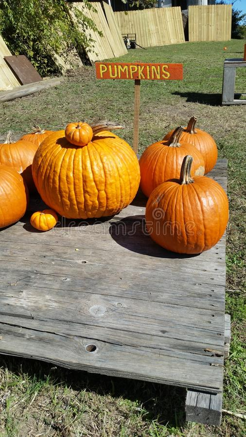 Pumpkins Sitting On A Table royalty free stock photo
