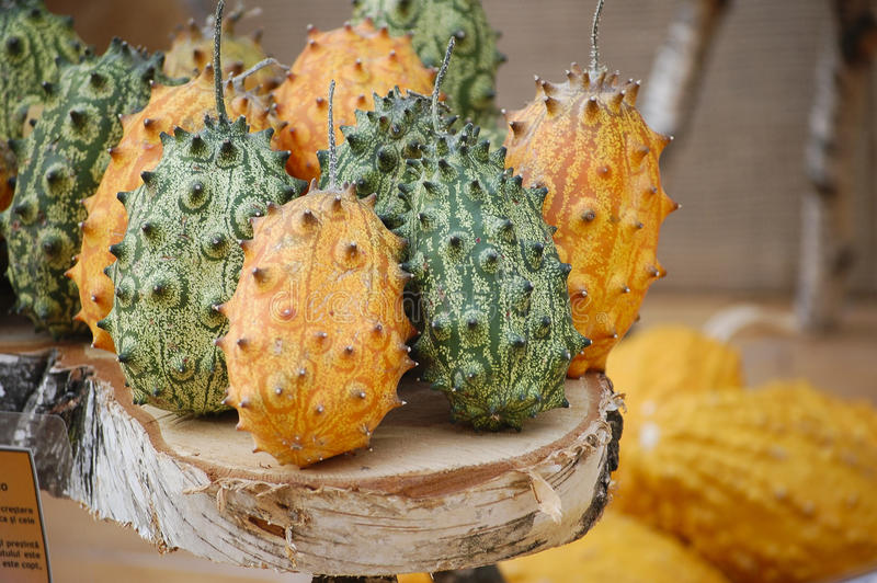 Pumpkins with spikes. Different styles and species of pumpkins with multiple colors stock photo
