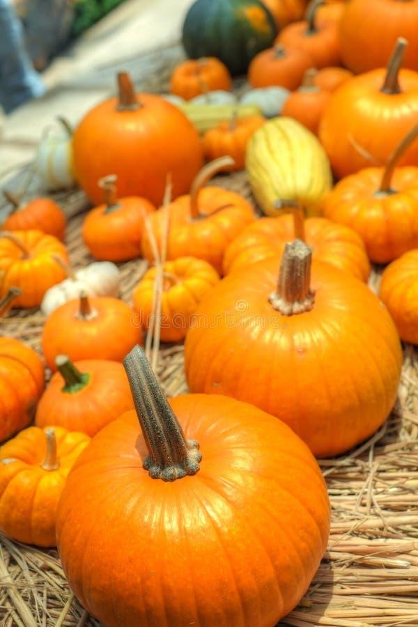 Pumpkins and squash royalty free stock photography