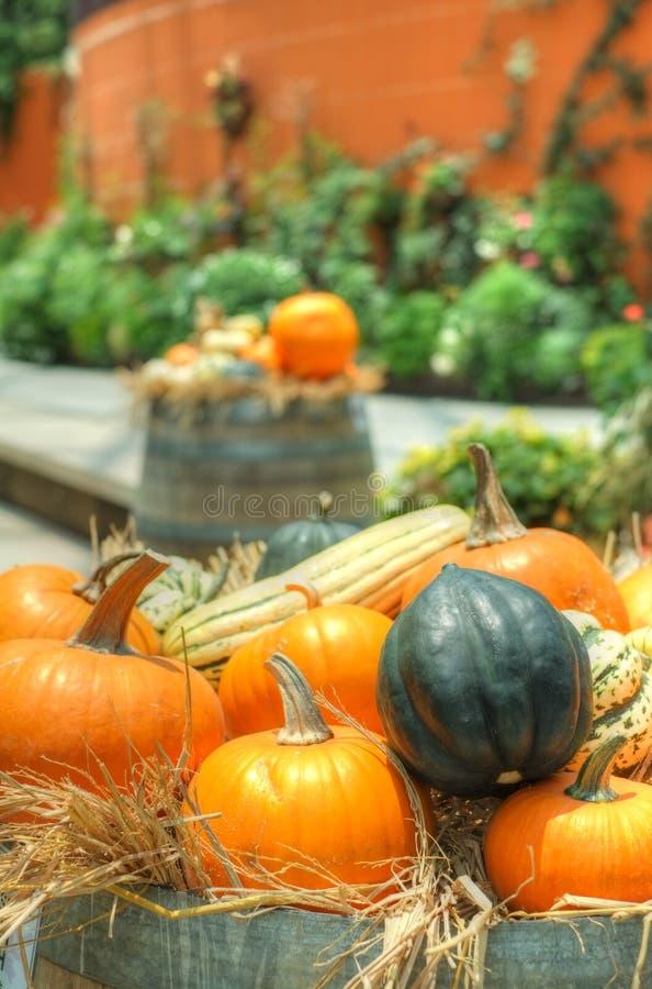 Pumpkins and squash royalty free stock image