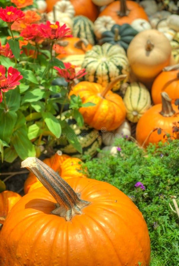Pumpkins and squash stock photos