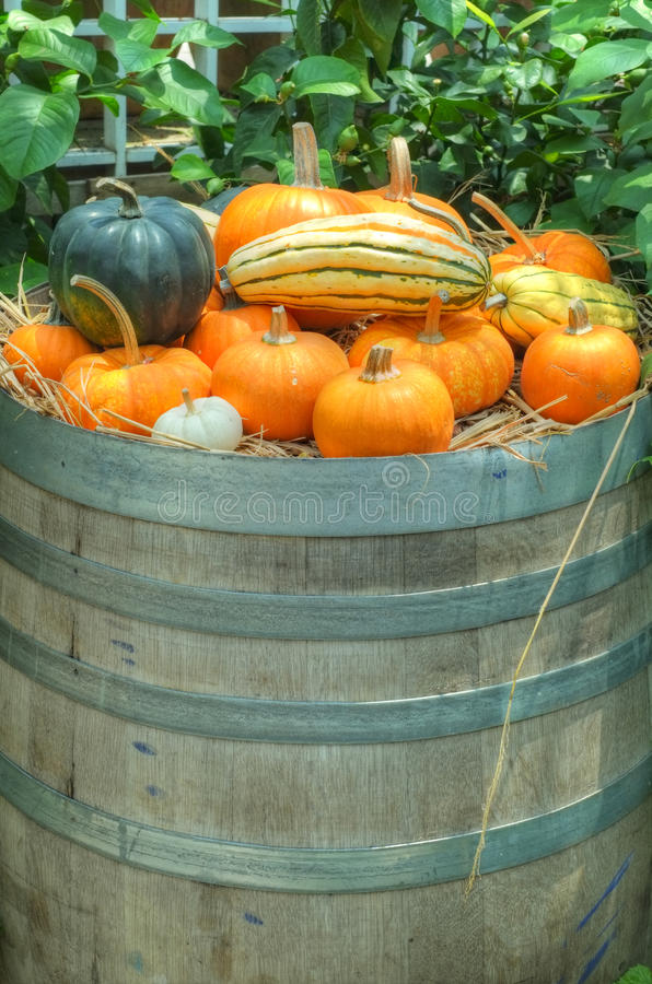 Pumpkins and squash on a barrel royalty free stock image