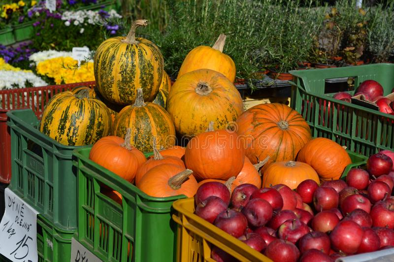 Pumpkins and squash and red apples Brno Cabbage Market, Moravia, Czech Republic. Autumnal fruit of pumpkins, squash, and red apples for sale at Cabbage Market stock photography