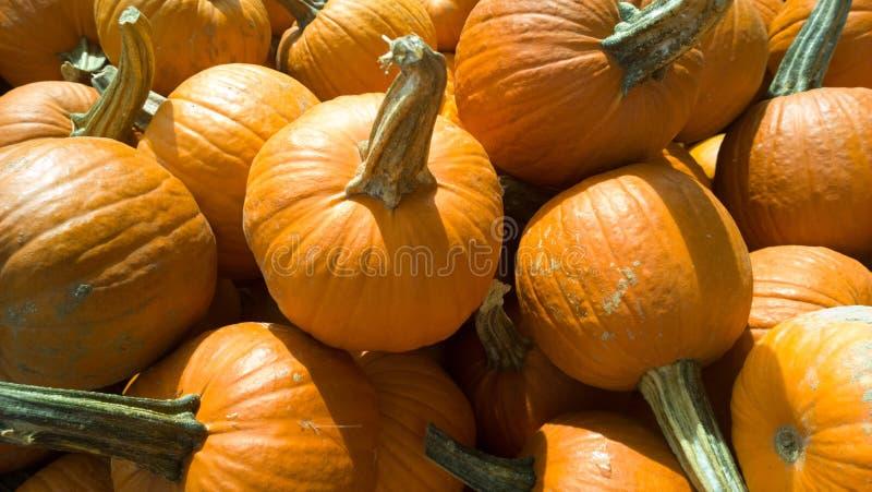 Pumpkins royaltyfri bild