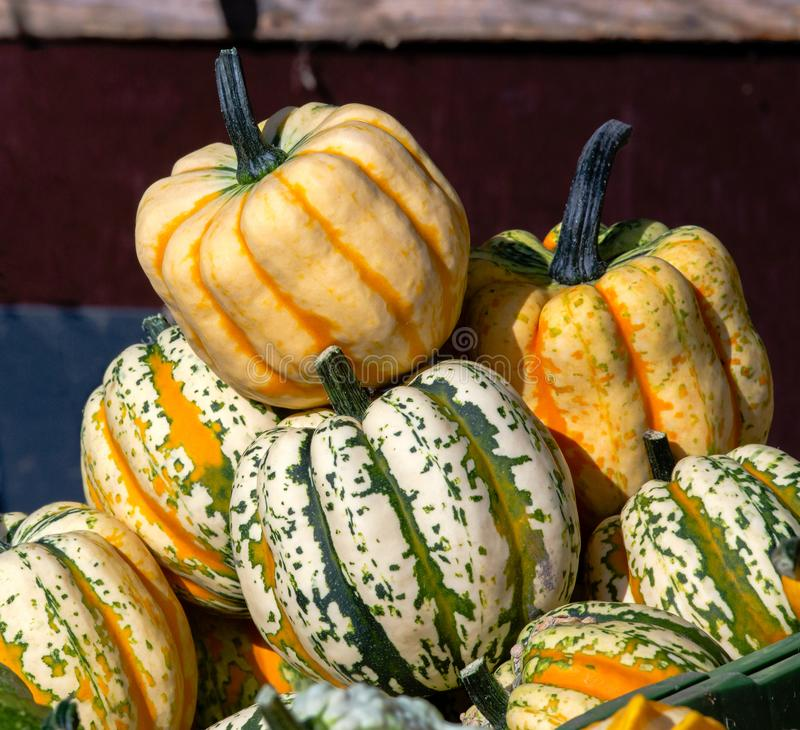 Pumpkins Stack, orange and green, for Halloween on market, with sunlight stock photography