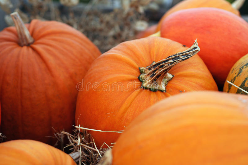 Pumpkins still-life with natural background royalty free stock photo