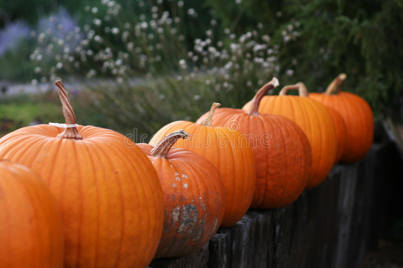 Pumpkins still-life with natural background royalty free stock photography