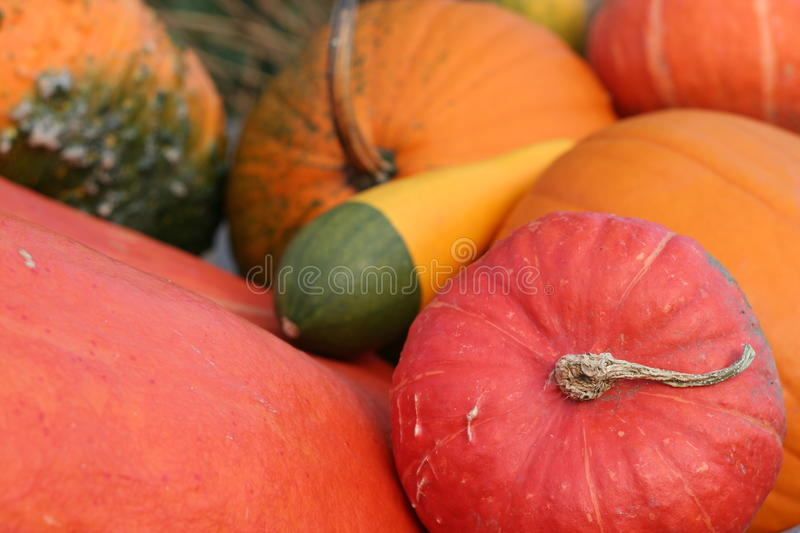 Pumpkins still-life with natural background stock photography