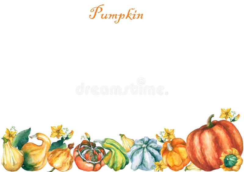 Pumpkins. Template with decorative pumpkins watercolor painting. Template with decorative pumpkins watercolor painting on white background stock illustration