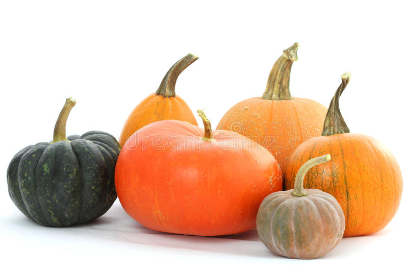 Pumpkins varieties stock photography