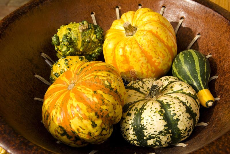 Pumpkins vegetable background stock images