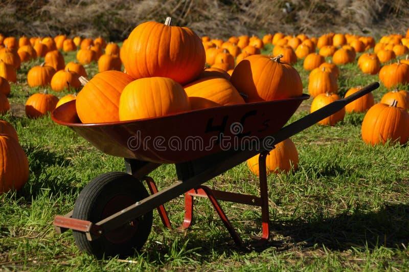 Pumpkins in a wheelbarrow stock images