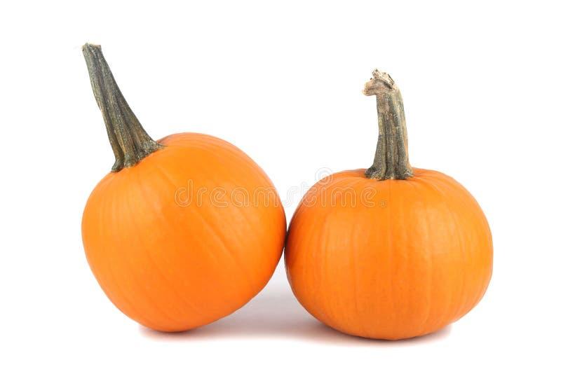 Download Pumpkins stock image. Image of squash, space, gourd, garden - 35636869