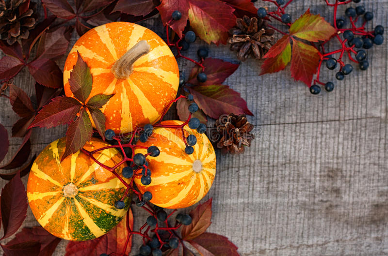 Pumpkins with wild grape on wooden board royalty free stock image