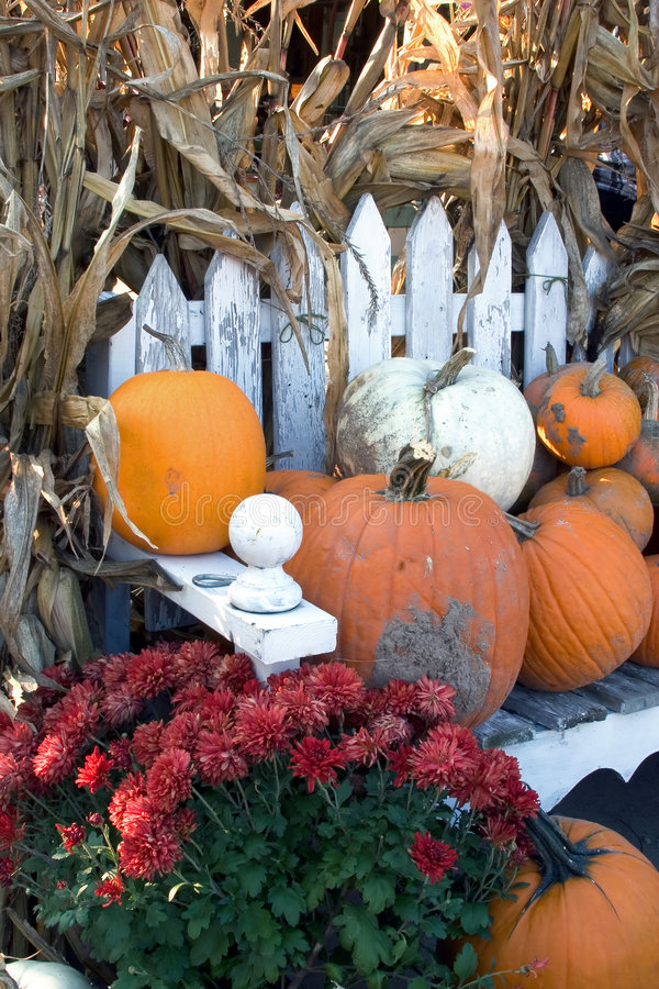 Free Pumpkins With Red Mums Royalty Free Stock Images - 280139
