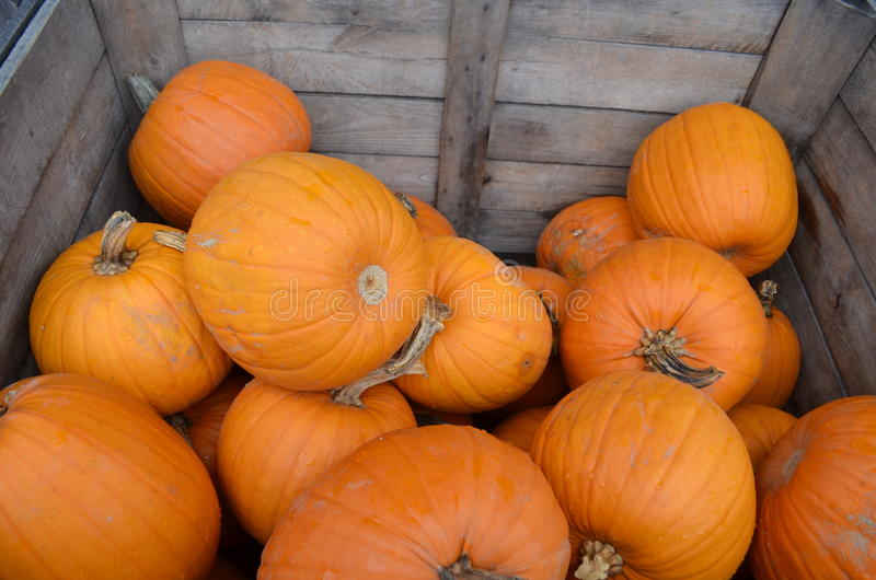 Pumpkins in a wood crate stock photo