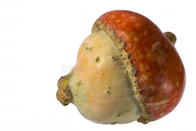 Pumplin στην άσπρη πλάγια όψη υποβάθρου στοκ φωτογραφία