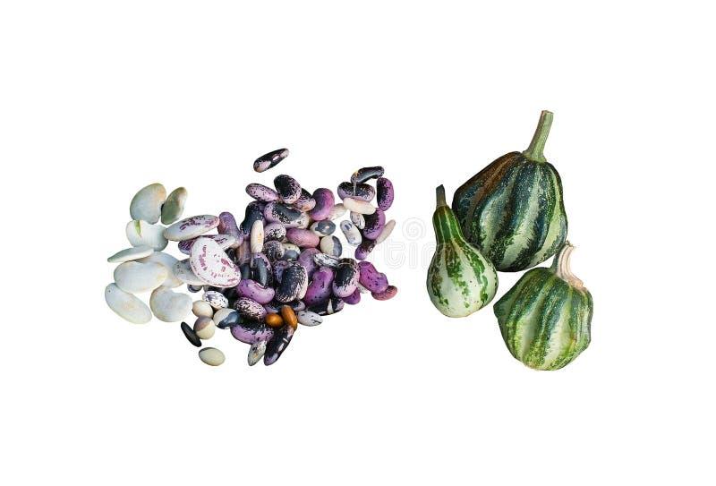 Pumpor och bönor arkivfoton