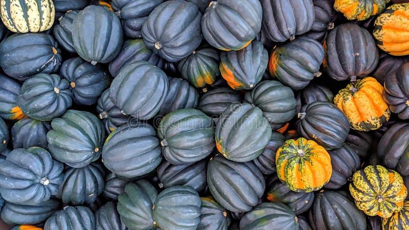 Pumpor svart och apelsin i massa fotografering för bildbyråer