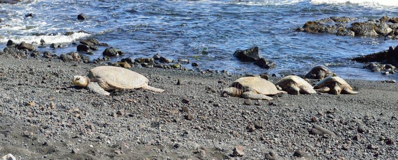 Punaluu黑色与乌龟的沙子海滩 免版税库存照片