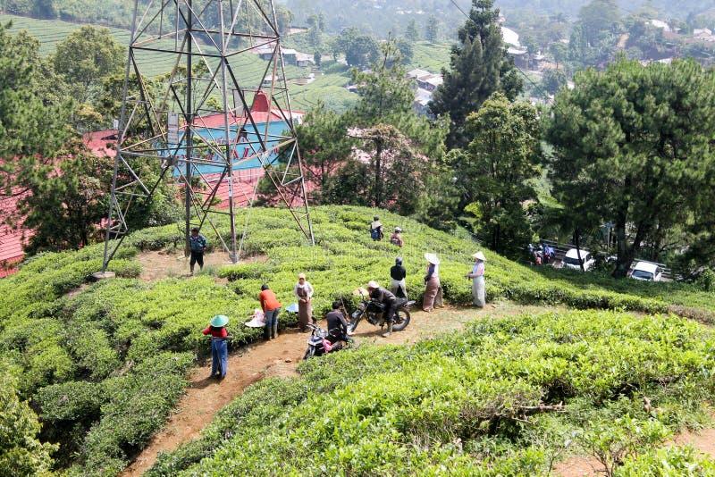 Puncak, Indonesië - Mei 10 2014: Arbeiders die in thee werken plantat stock foto