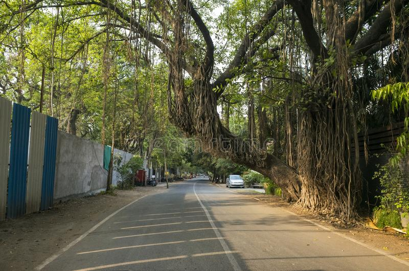 Beautiful old tree in Pune India stock images
