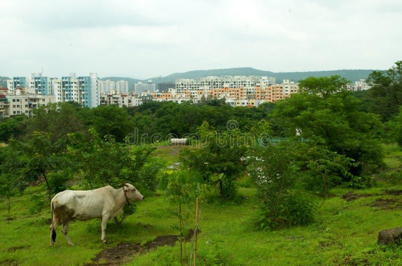 Pune stads-blandning av ett stads- och lantligt royaltyfria foton