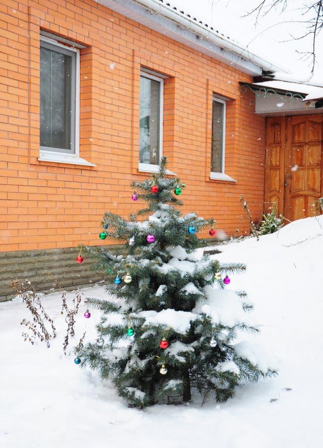 Pungen Spruce azul do Picea com a decoração colorida das bolas do Natal no jardim Árvore de Natal exterior na neve imagem de stock royalty free