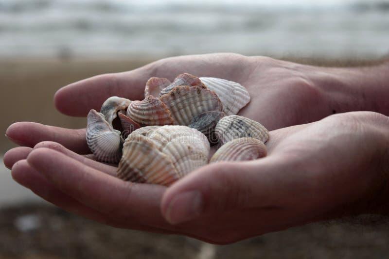 Punhado das conchas do mar imagem de stock