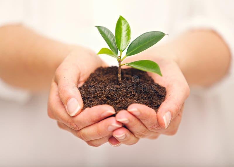 Punhado do solo com crescimento da planta nova