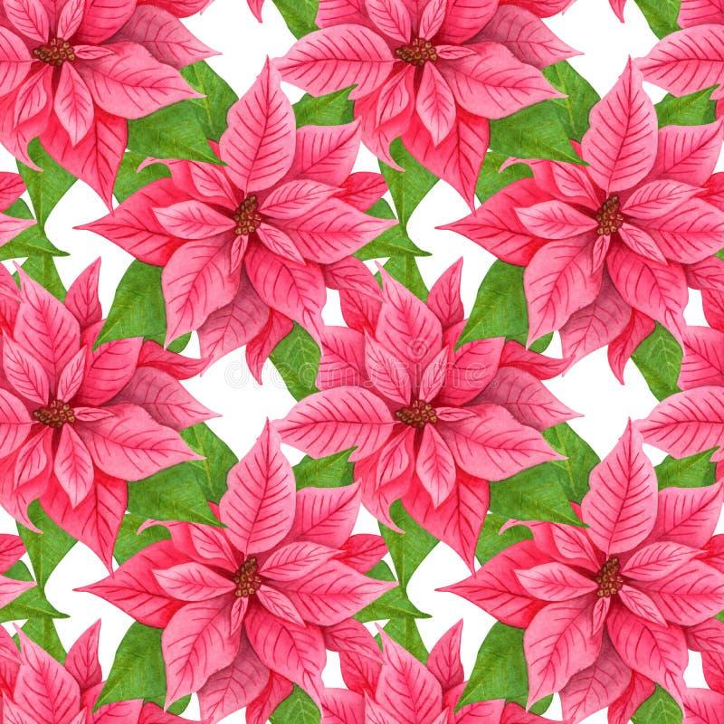 Puninsette navideño acuarela, patrón transparente. Flores rojas de invierno. fondo extensible stock de ilustración