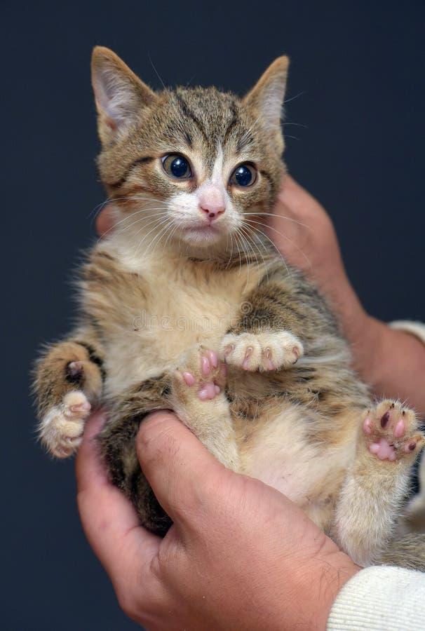 kitty pushned)